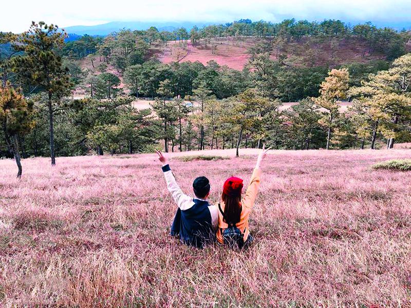 Đồi cỏ hồng Đà Lạt - Bức tranh thiên nhiên thơ mộng